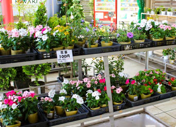 花・植木コーナー